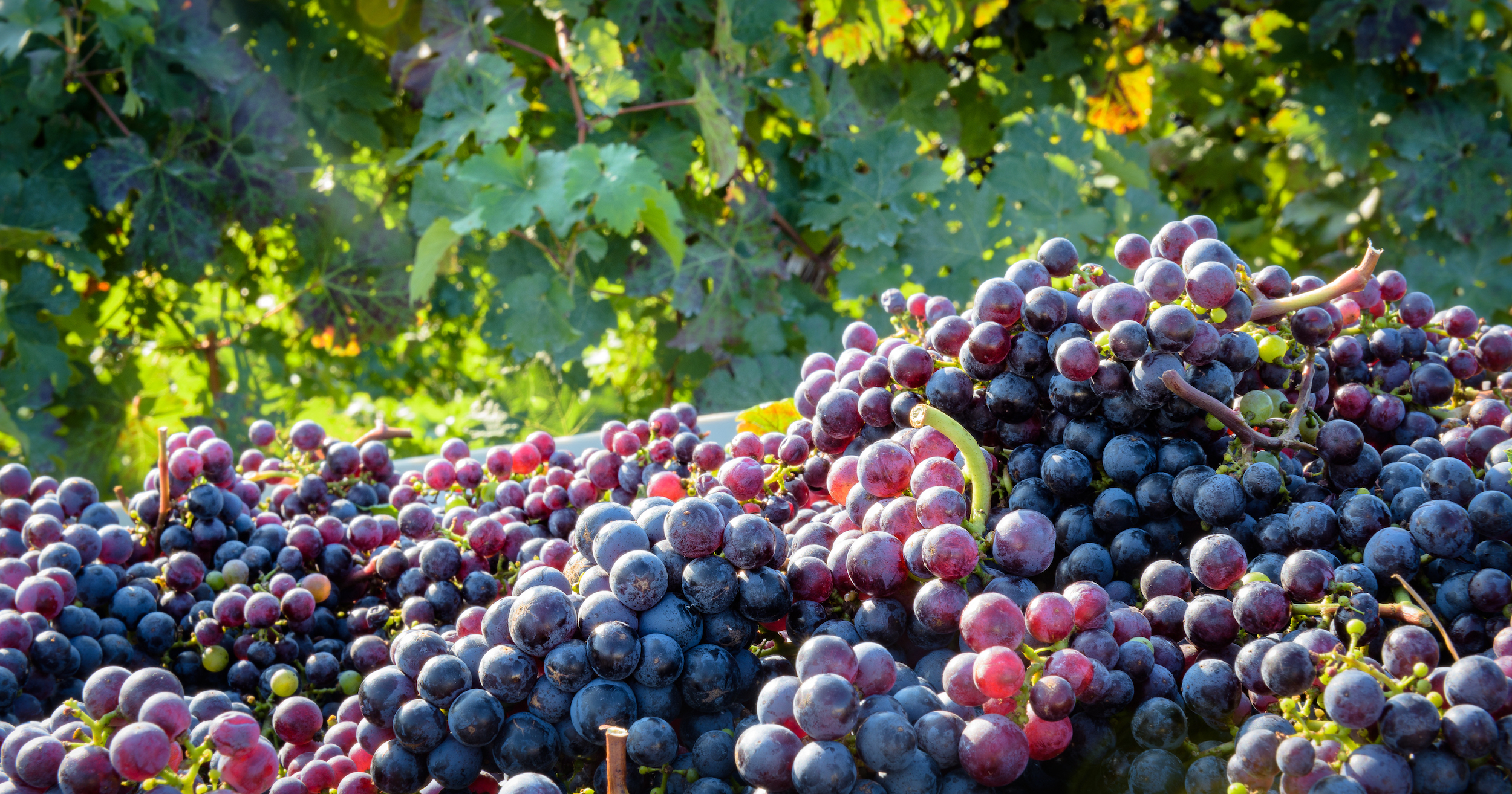 View the list of Participating Wineries