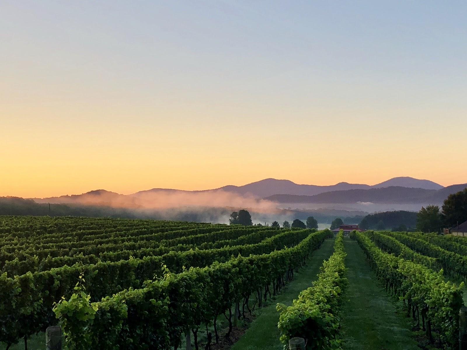 Afton Mountain Vineyards: A Blue Ridge Beauty